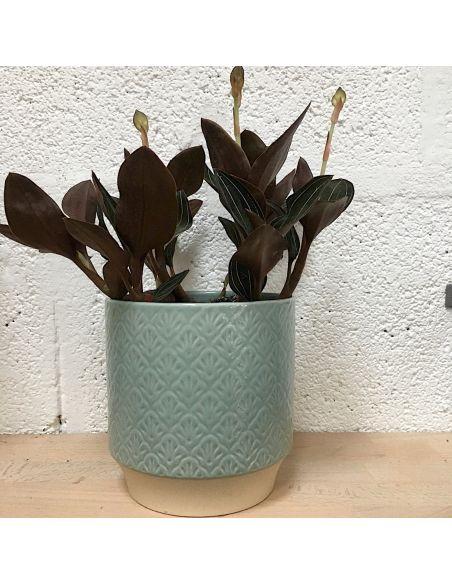 orchidée bijoux