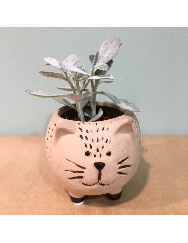 chat boule