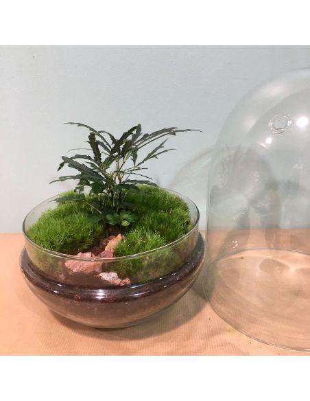terrarium œuf: aralia