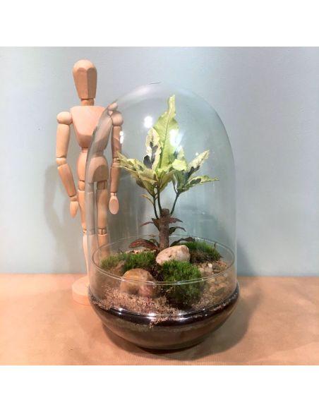 terrarium œuf: croton et fittonia